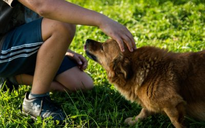 Hundetraining: Die Grundbefehle