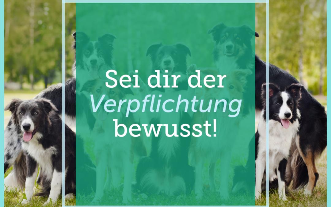 Hundetraining-Tipp 001 – Sei dir der Verpflichtung bewusst!