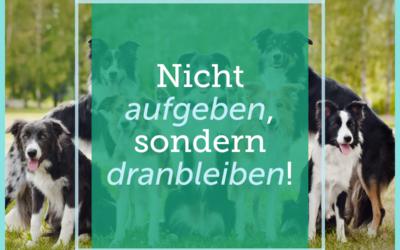 Hundetraining-Tipp 002: Nicht aufgeben, sondern dranbleiben!