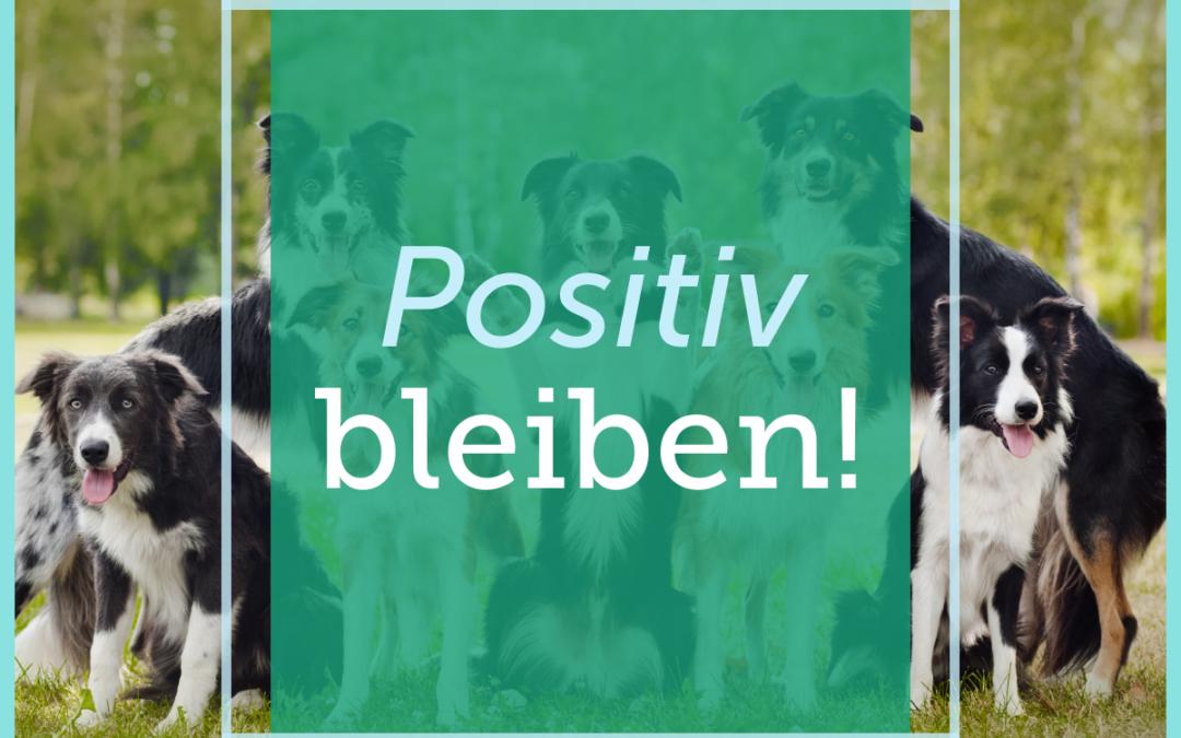 Hundetraining-Tipp 003: Positiv bleiben!