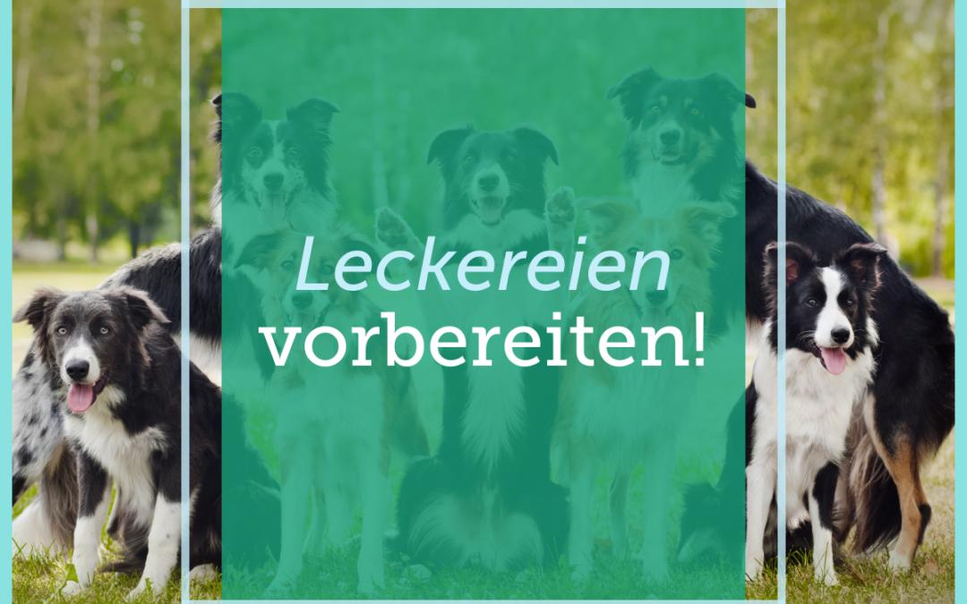 Hundetraining-Tipp 004: Leckereien vorbereiten!