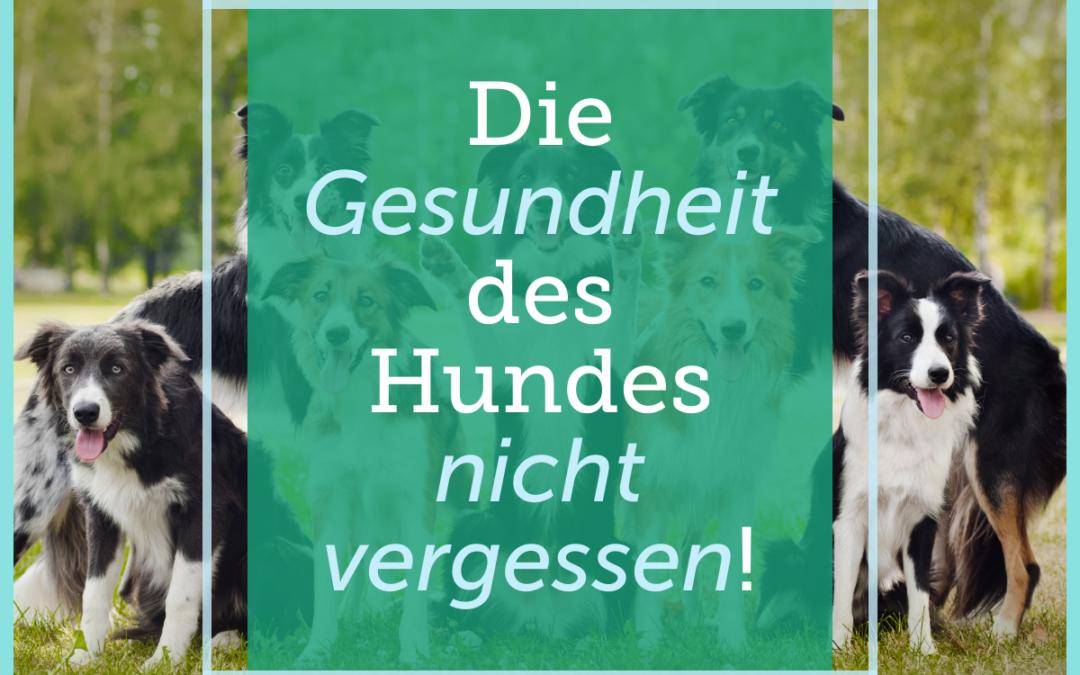 Hundetraining-Tipp 005: Die Gesundheit des Hundes nicht vergessen!