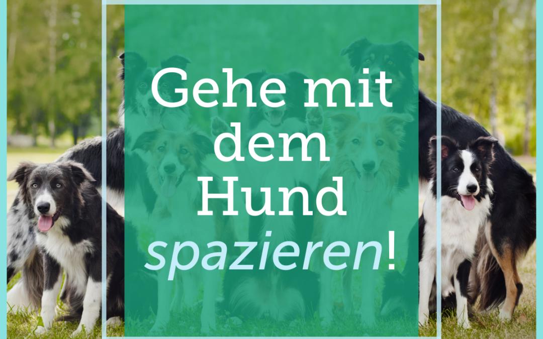 Hundetraining-Tipp 006: Gehe mit dem Hund spazieren!