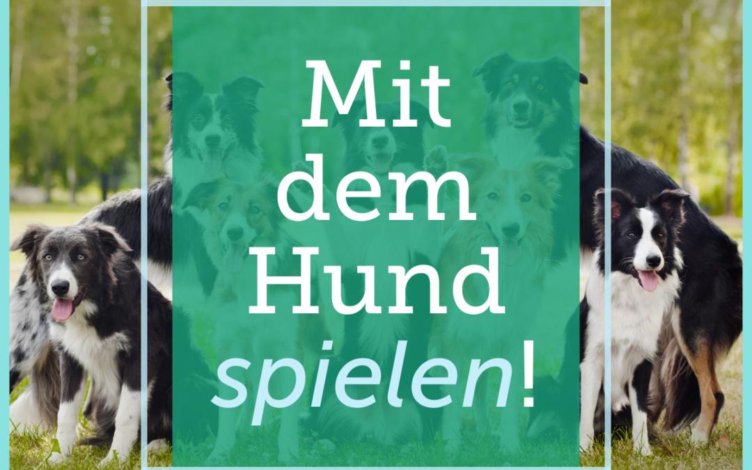 Hundetraining-Tipp 007: Mit dem Hund spielen!
