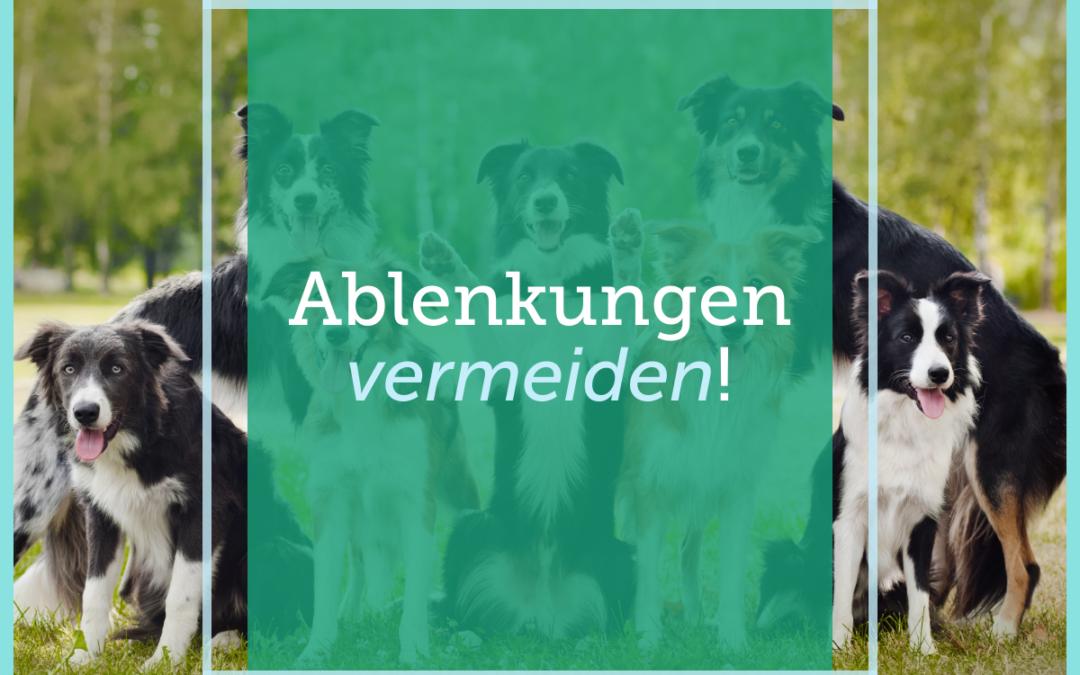 Hundetraining-Tipp 008: Ablenkungen vermeiden!