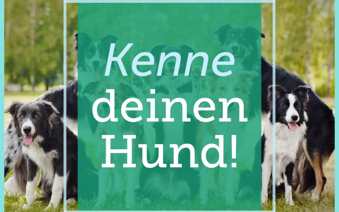 Hundetraining-Tipp 009: Kenne deinen Hund!