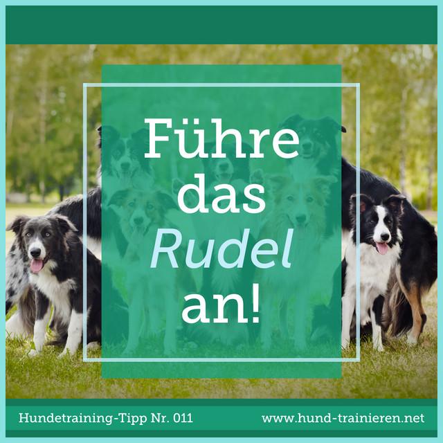 Hundetraining-Tipp 011: Führe das Rudel an!  