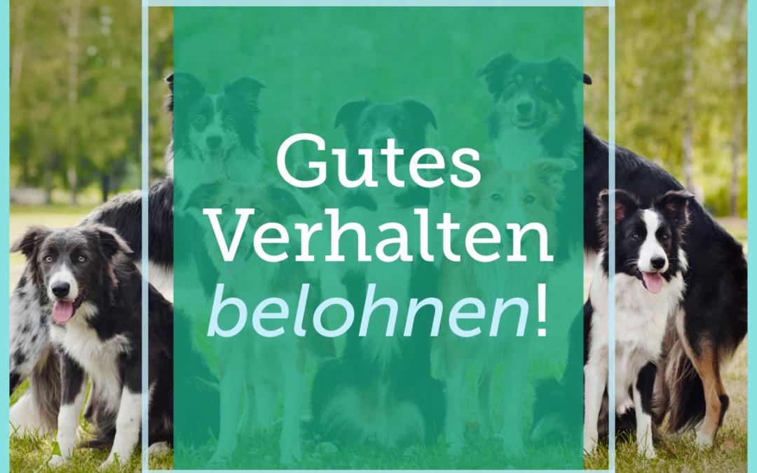 Hundetraining-Tipp 012: Gutes Verhalten belohnen!