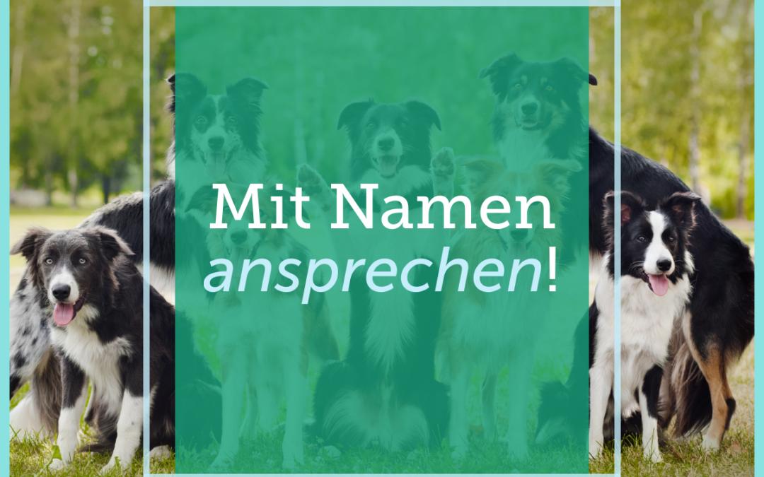 Hundetraining-Tipp 013: Mit Namen ansprechen!