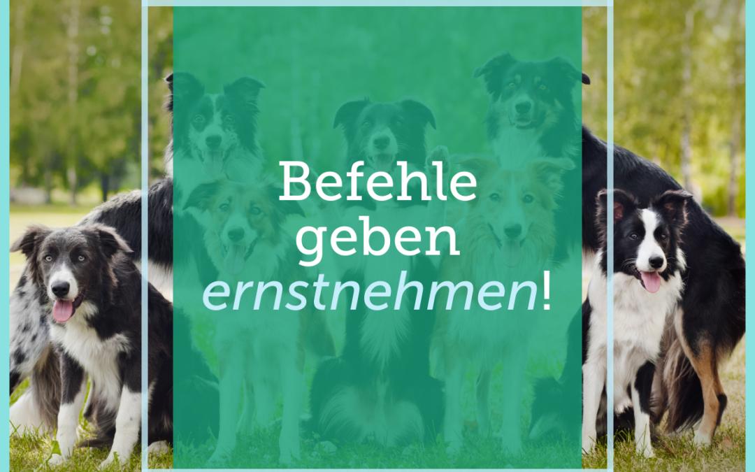Hundetraining-Tipp 014: Befehle geben ernstnehmen!